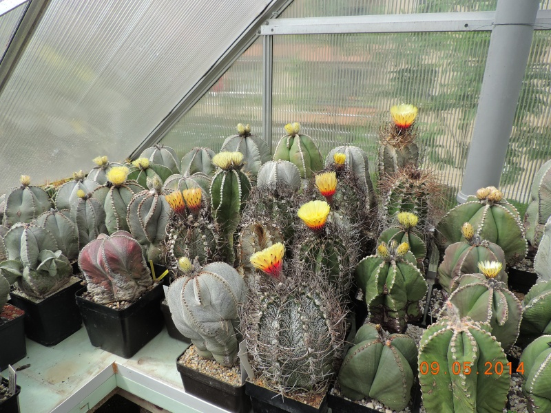 Cacti and Sukkulent in Köln, every day new flowers in the greenhouse Part 94 Bild2957
