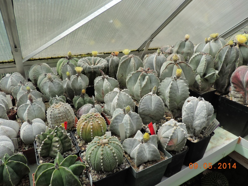 Cacti and Sukkulent in Köln, every day new flowers in the greenhouse Part 94 Bild2958