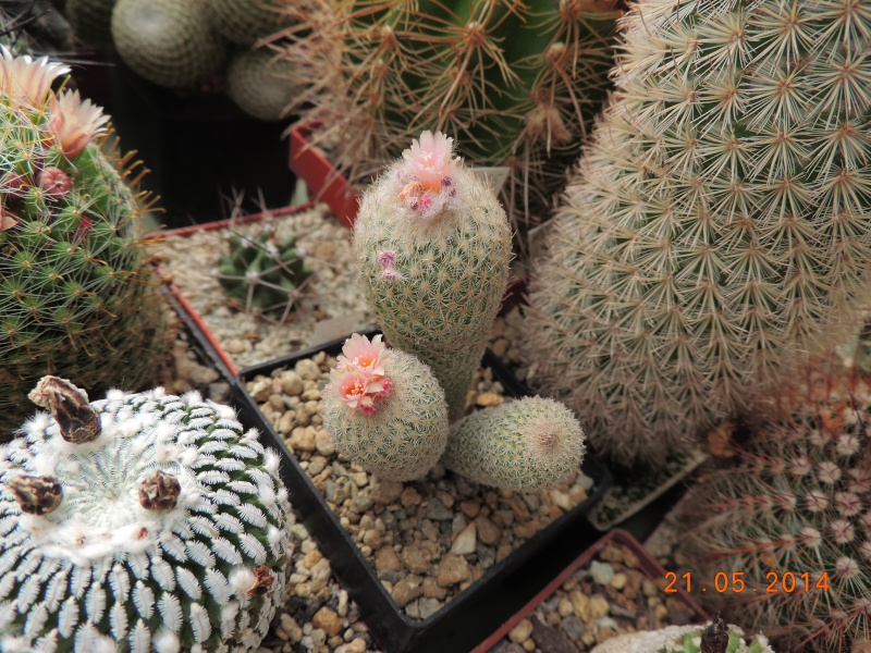 Cacti and Sukkulent in Köln, every day new flowers in the greenhouse Part 94 Bild2971