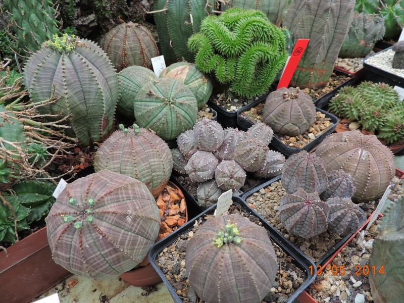 Cacti and Sukkulent in Köln, every day new flowers in the greenhouse Part 94 Bild3000