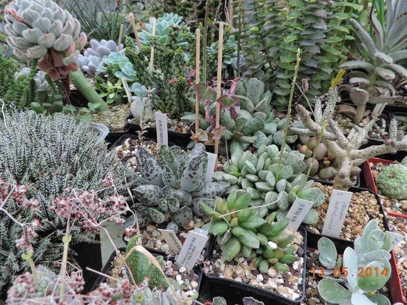 Cacti and Sukkulent in Köln, every day new flowers in the greenhouse Part 94 Bild3005