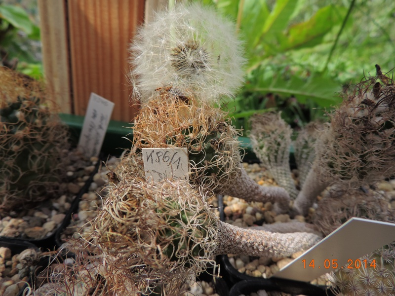 Cacti and Sukkulent in Köln, every day new flowers in the greenhouse Part 95 Bild3010