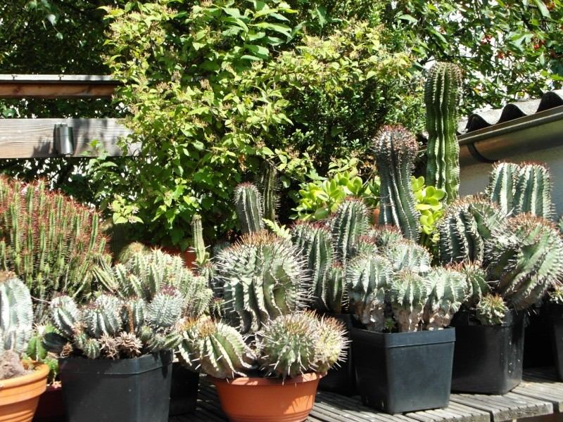 Cacti and Sukkulent in Köln, every day new flowers in the greenhouse Part 66 Bild_111