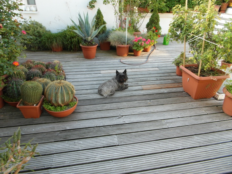 Cacti and Sukkulent in Köln, every day new flowers in the greenhouse Part 69 Bild_431