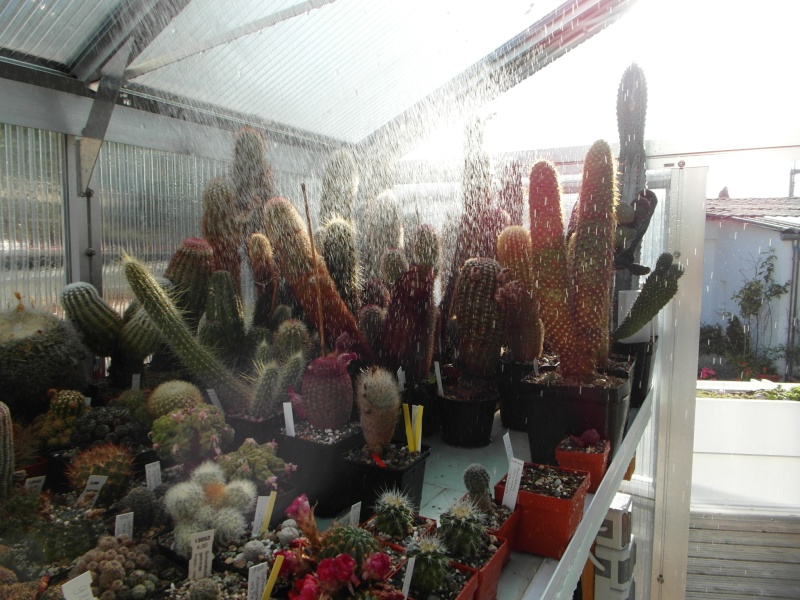 Cacti and Sukkulent in Köln, every day new flowers in the greenhouse Part 69 Bild_432