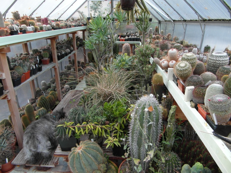 Cacti and Sukkulent in Köln, every day new flowers in the greenhouse Part 69 Bild_454