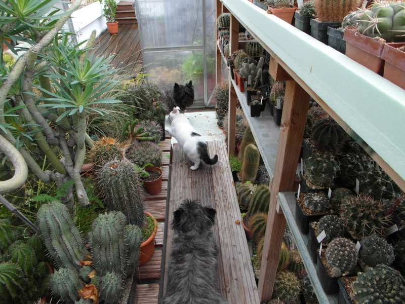 Cacti and Sukkulent in Köln, every day new flowers in the greenhouse Part 69 Bild_455