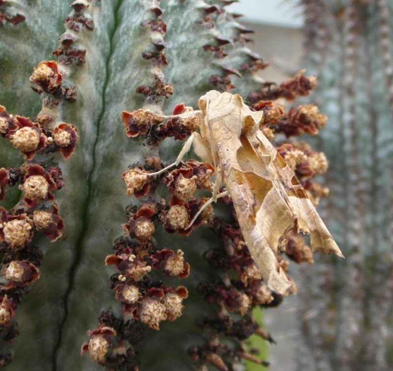 Cacti and Sukkulent in Köln, every day new flowers in the greenhouse Part 69 Bild_466
