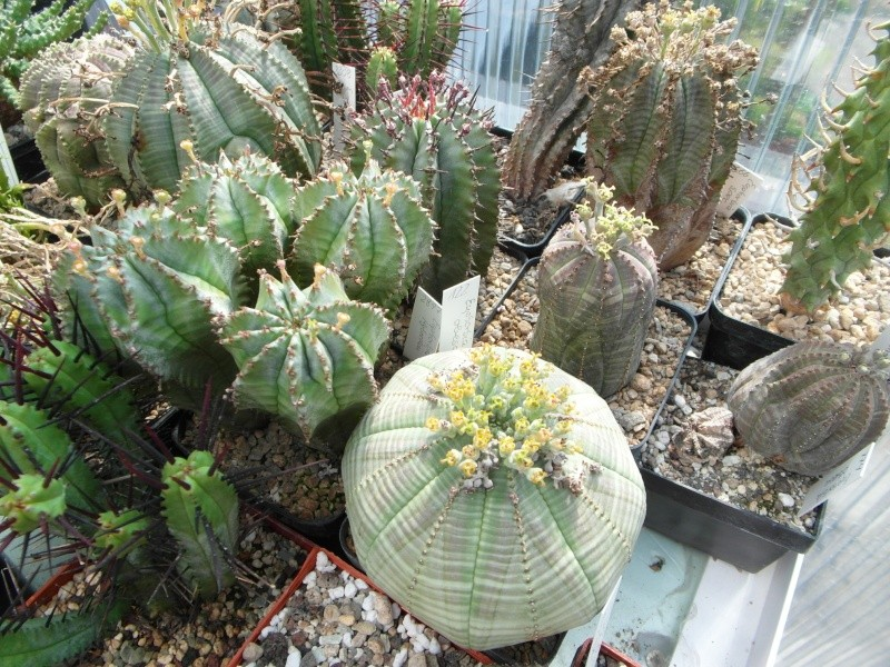 Cacti and Sukkulent in Köln, every day new flowers in the greenhouse Part 69 Bild_497