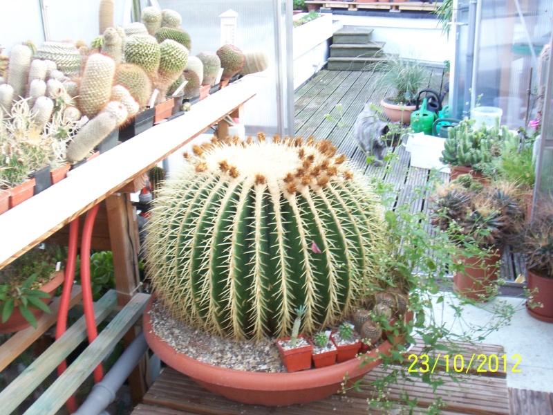 Cacti and Sukkulent in Köln, every day new flowers in the greenhouse Part 69 Bild_498