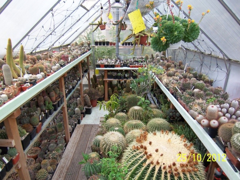 Cacti and Sukkulent in Köln, every day new flowers in the greenhouse Part 69 Bild_499