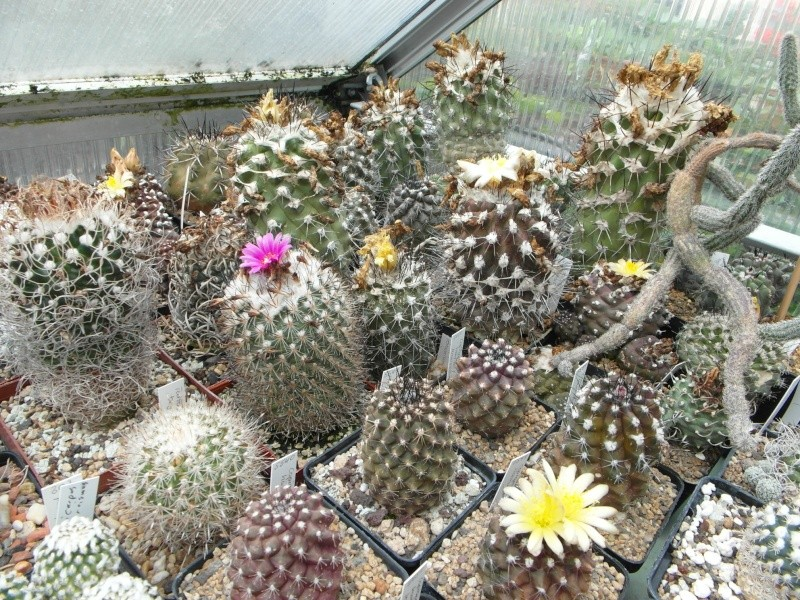 Cacti and Sukkulent in Köln, every day new flowers in the greenhouse Part 69 Bild_504