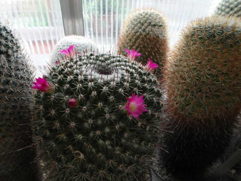 Cacti and Sukkulent in Köln, every day new flowers in the greenhouse Part 69 Bild_508