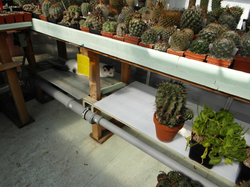 Cacti and Sukkulent in Köln, every day new flowers in the greenhouse Part 70 Bild_711