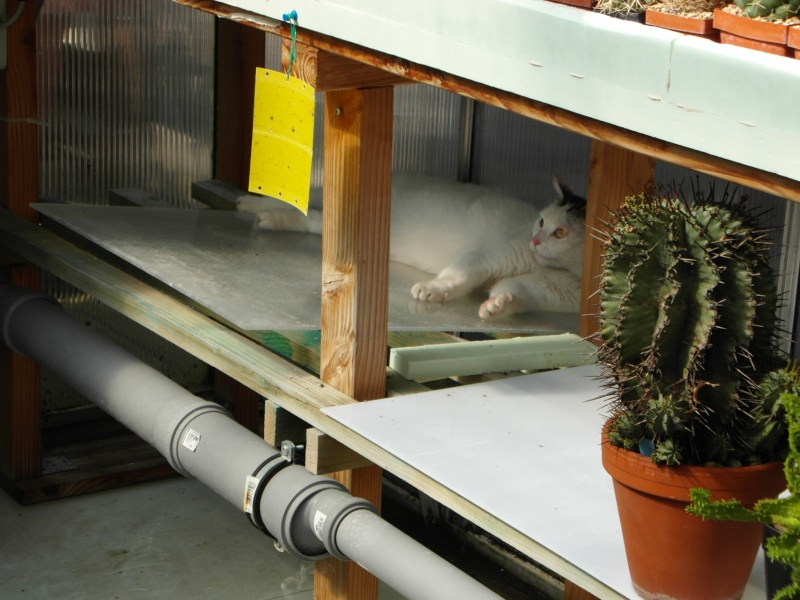 Cacti and Sukkulent in Köln, every day new flowers in the greenhouse Part 70 Bild_712