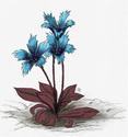 Les HUMAINS : L'herbier Arcanien Fleur410