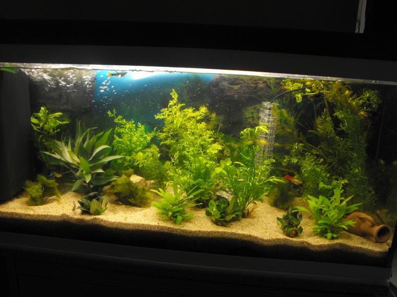 L'aquarium de gomorck Dscf8610