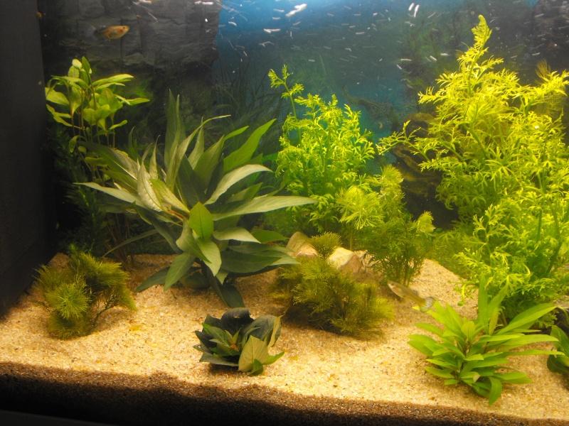 L'aquarium de gomorck Dscf8611