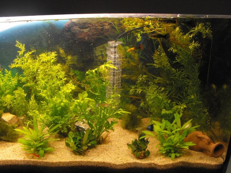 L'aquarium de gomorck Dscf8612