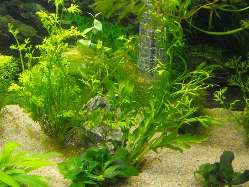 L'aquarium de gomorck Dscf8710