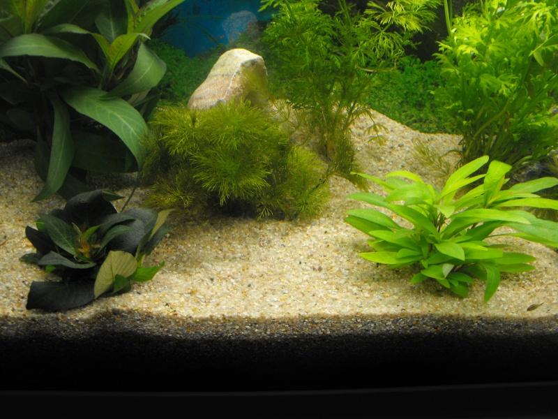 L'aquarium de gomorck Dscf8711