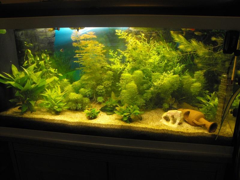 L'aquarium de gomorck Dscf8815