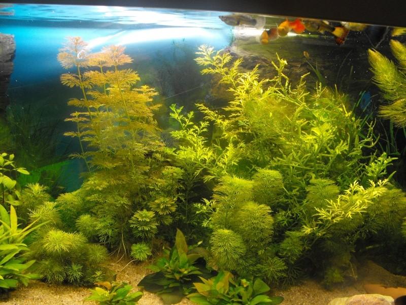 L'aquarium de gomorck Dscf8817