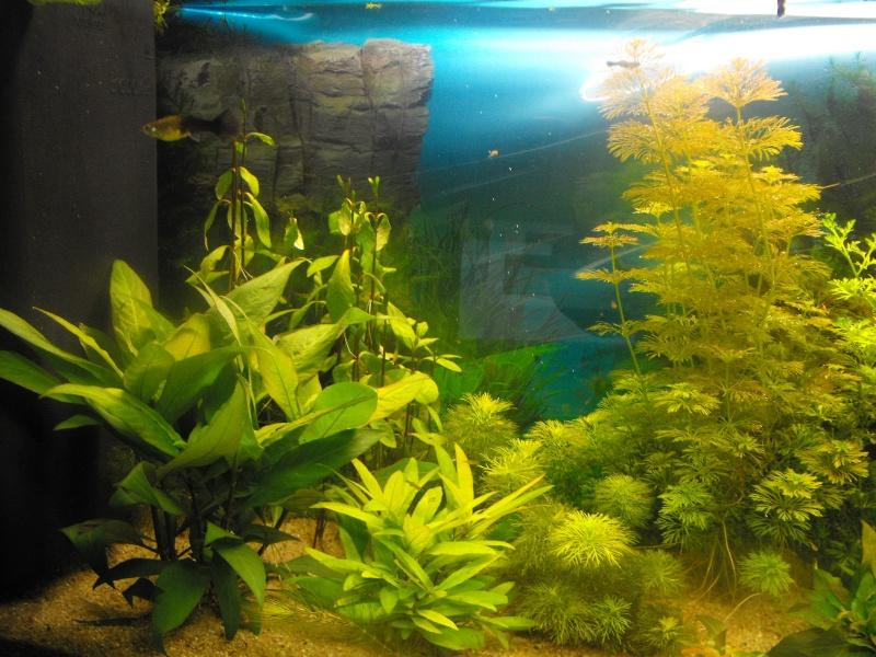L'aquarium de gomorck Dscf8819