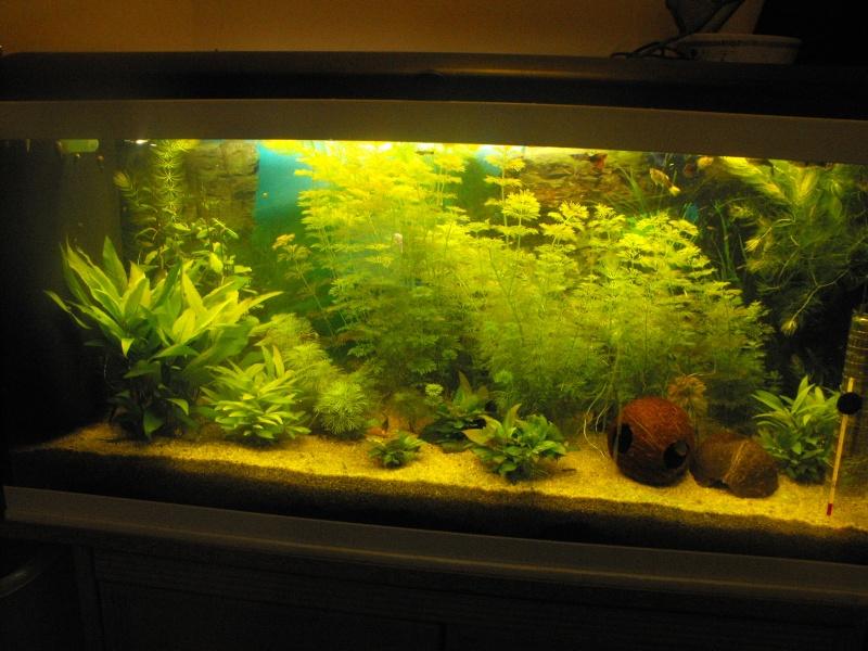 L'aquarium de gomorck Dscf8825