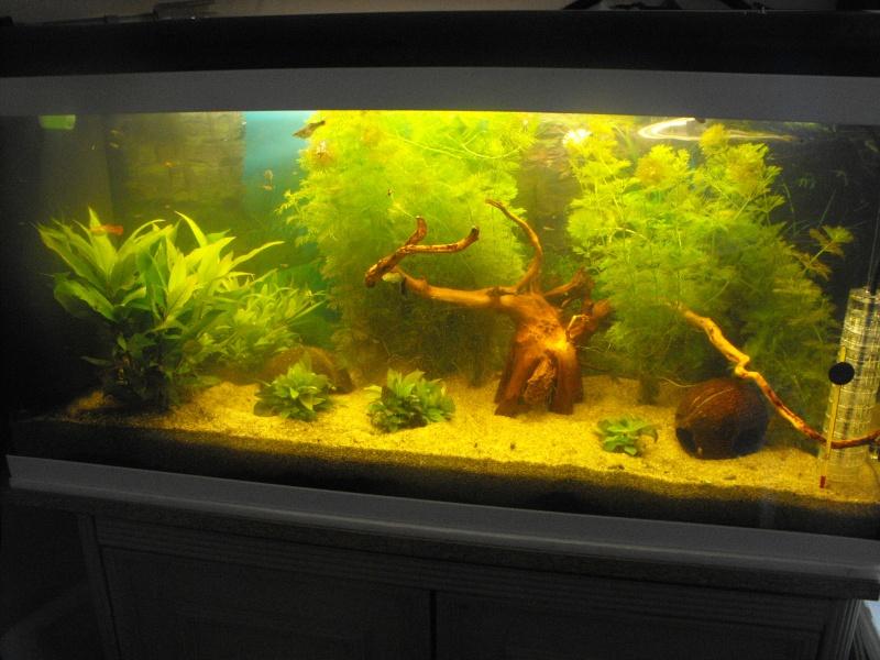 L'aquarium de gomorck Dscf8833