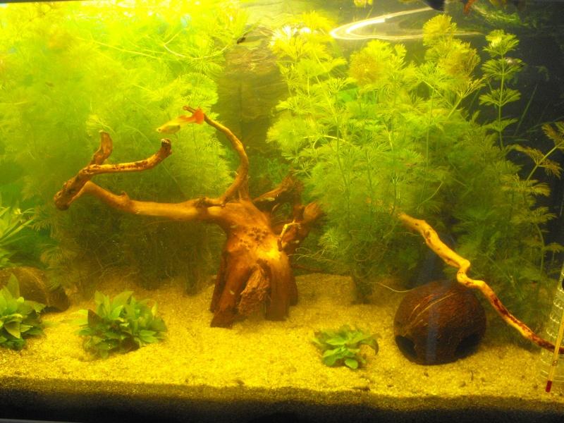 L'aquarium de gomorck Dscf8834