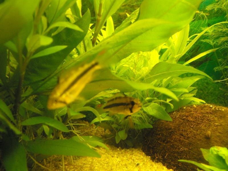 L'aquarium de gomorck Dscf8835
