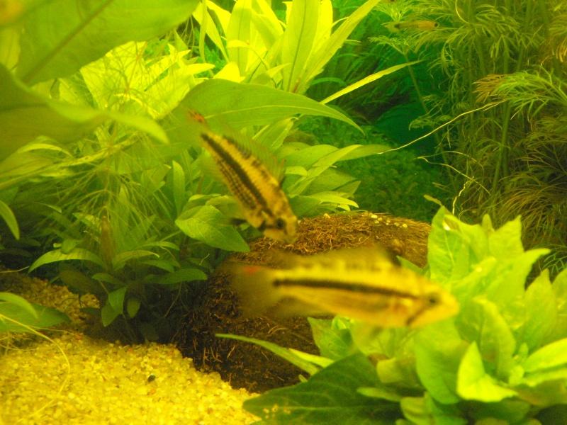 L'aquarium de gomorck Dscf8837