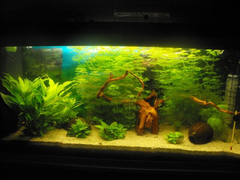 L'aquarium de gomorck Dscf8838