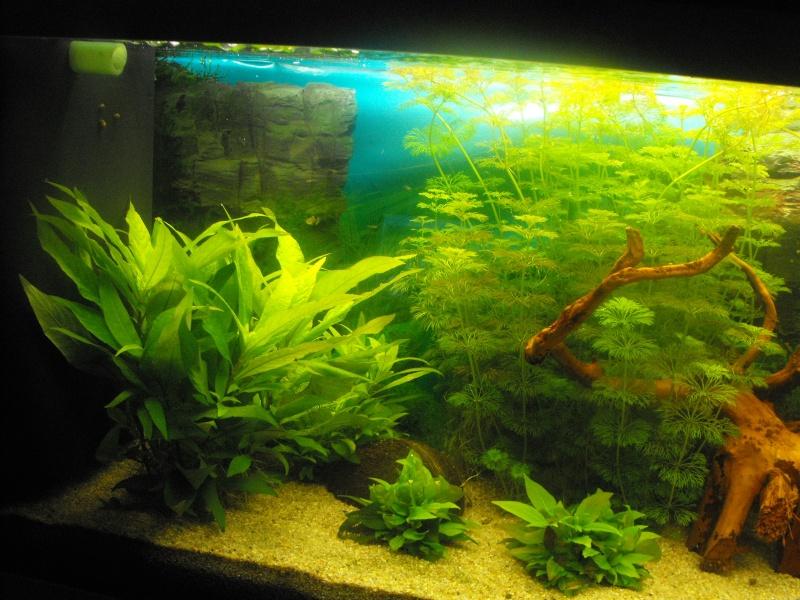 L'aquarium de gomorck Dscf8839