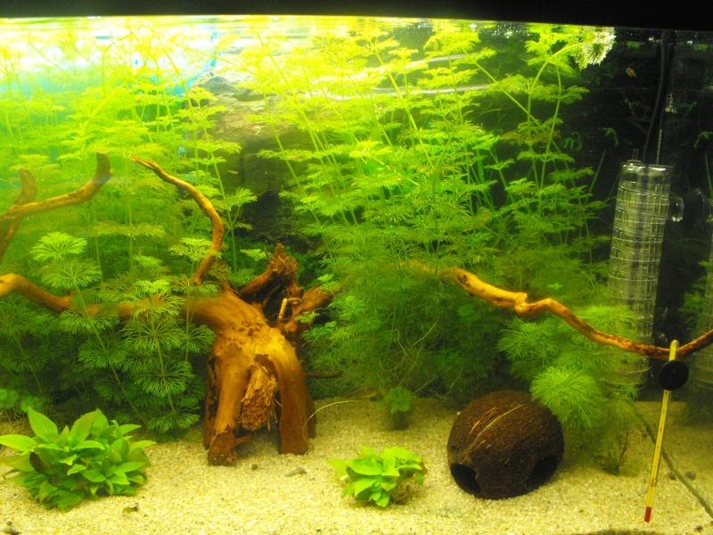 L'aquarium de gomorck Dscf8840