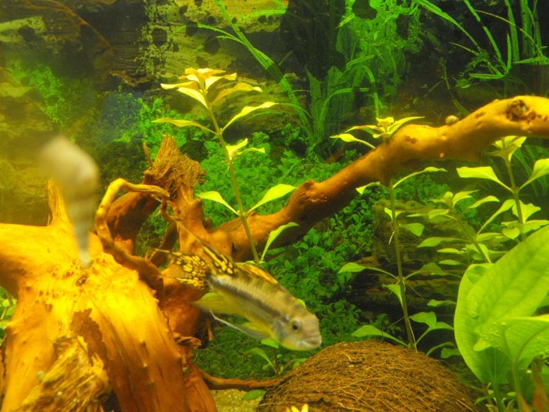 L'aquarium de gomorck - Page 2 Dscf8911