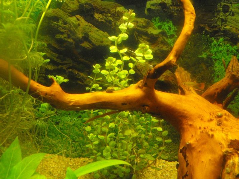 L'aquarium de gomorck - Page 2 Dscf8912