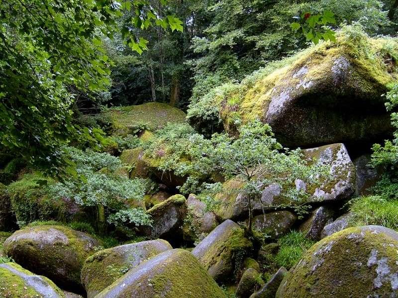 Forêt d'Huelgoat S7002611