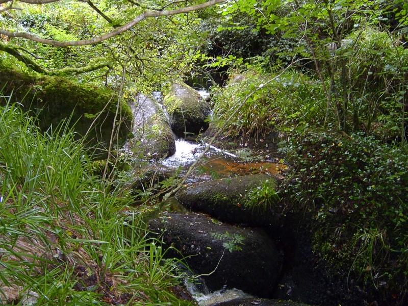 Forêt d'Huelgoat S7002612