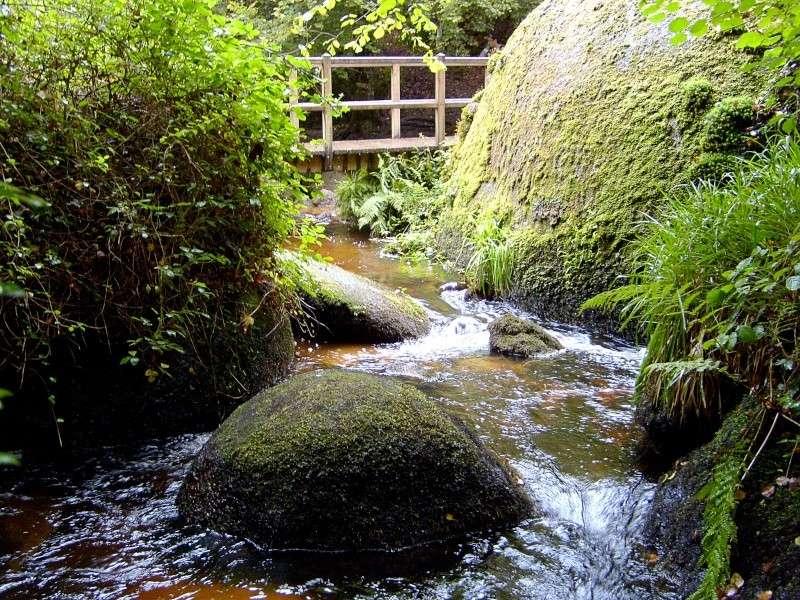 Forêt d'Huelgoat S7002614