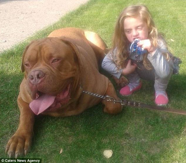 Tragjedi/ Pit Bulli ha në sy të nënës vajzën 4-vjeçare (foto) 7775210