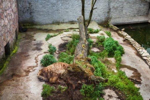 Trishtimi i kafshëve në kopshte zoologjike! Ariu10