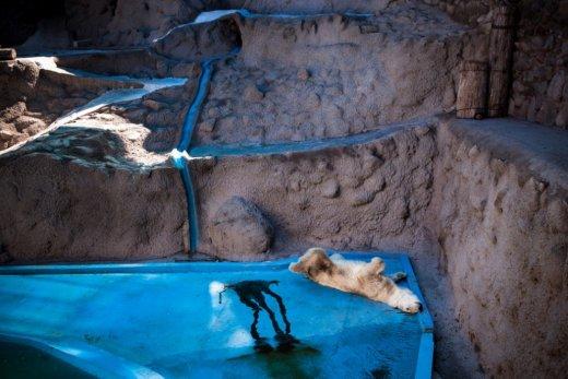 Trishtimi i kafshëve në kopshte zoologjike! Ariu210