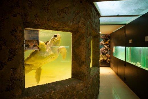Trishtimi i kafshëve në kopshte zoologjike! Breshk10