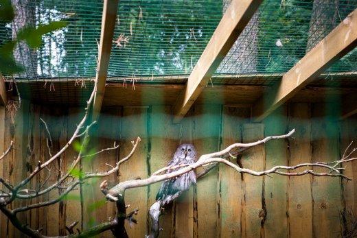 Trishtimi i kafshëve në kopshte zoologjike! Bufii10