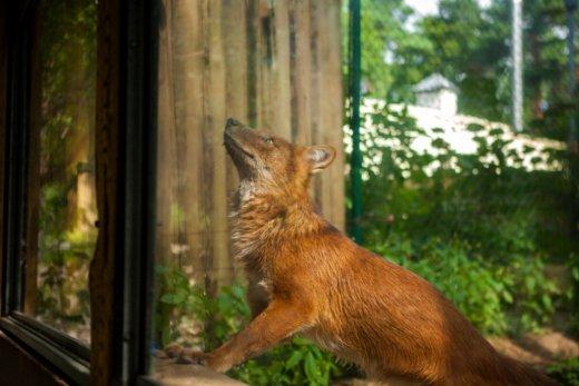 Trishtimi i kafshëve në kopshte zoologjike! Dhelpr10