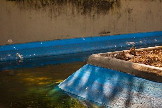 Trishtimi i kafshëve në kopshte zoologjike! Dhelpr11