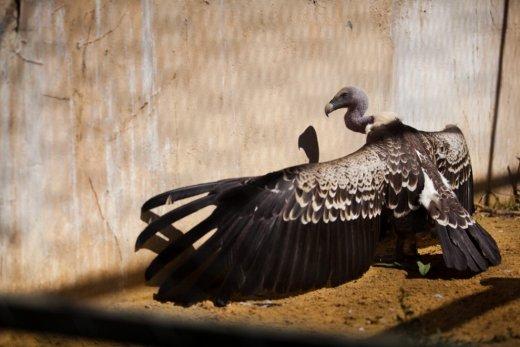 Trishtimi i kafshëve në kopshte zoologjike! Huta10