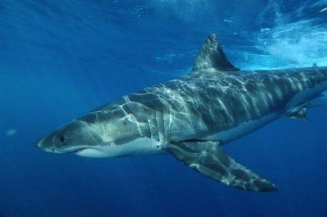 """Peshkaqeni përmbanë një substancë e cila """"vret"""" viruset njerëzor ! Peshka10"""